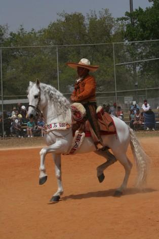 ANDALUSIAN & AZTECA DANCING HORSES