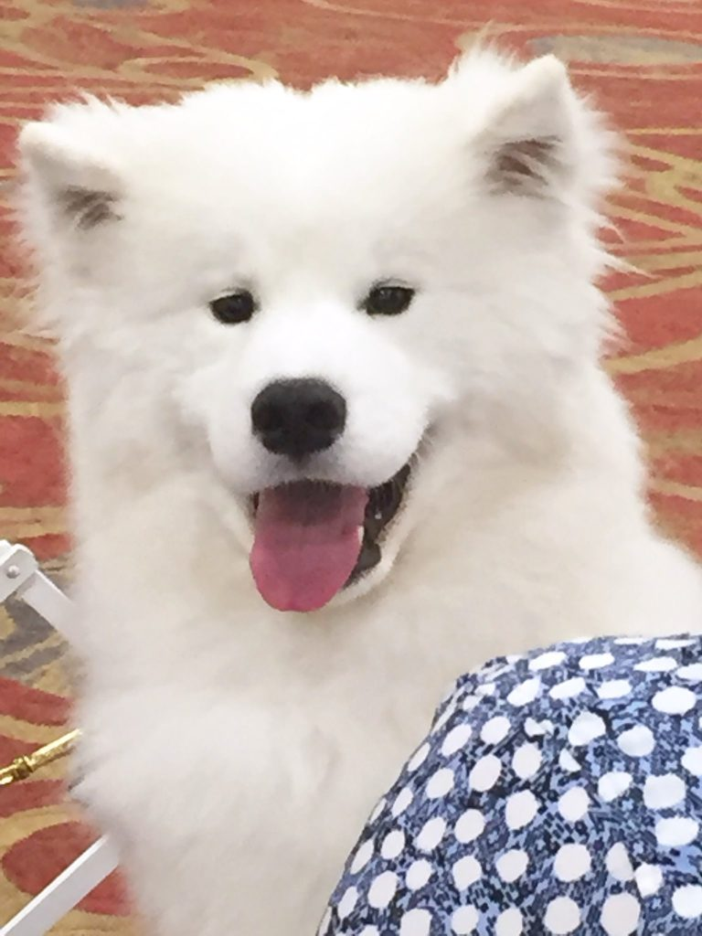 Samoyed Club of America, Inc., 88th National Specialty Dog Show at the Delta Hotels by Marriott South Sioux City Riverfront