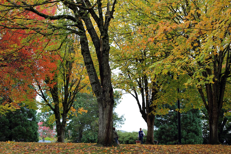 Bella Vista Park