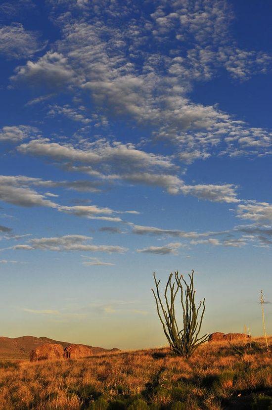 scenic-photo-desert