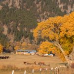 10-27-18-Ranch-One-Genoa-Nevada
