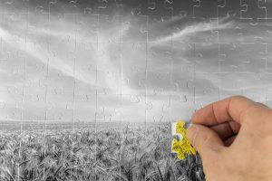 Agronomy Puzzle Piece