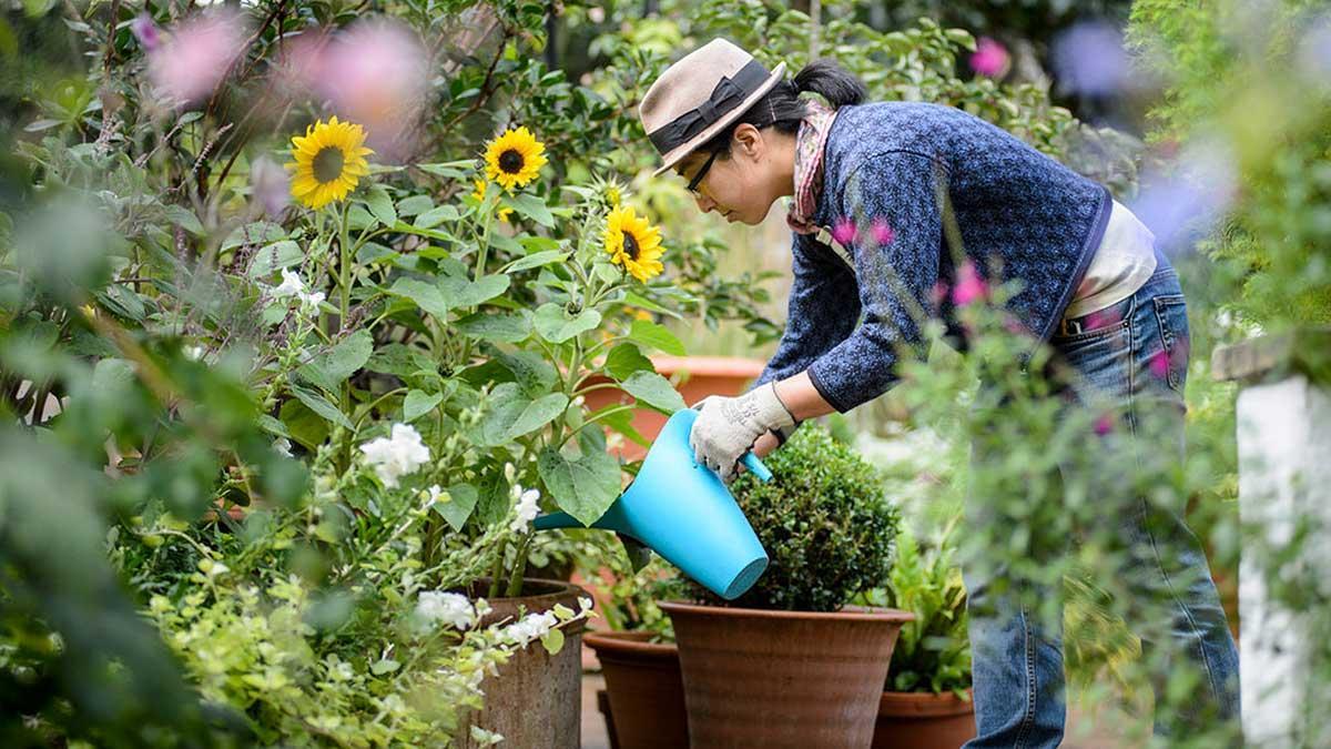 Novato Gardening Club, Chamber of commerce new member membership sustainability activities things to do in novato