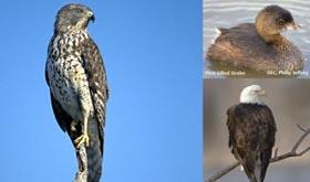 eagle-watch-280x165