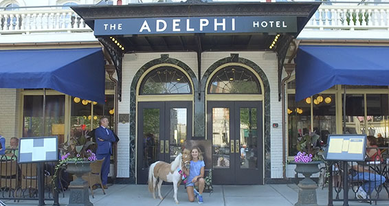 Miniature horse in front of Adelphi