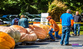 Saratoga Giant Pumpkinfest