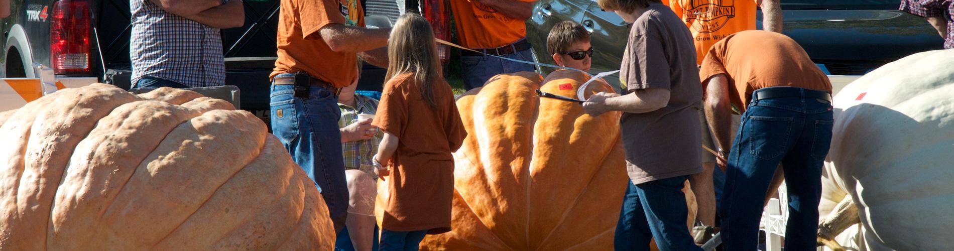 pumpkinfest contest