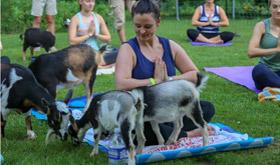 goat-yoga-280x165