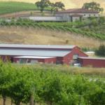 Winery_9