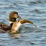 LoonsLearning2