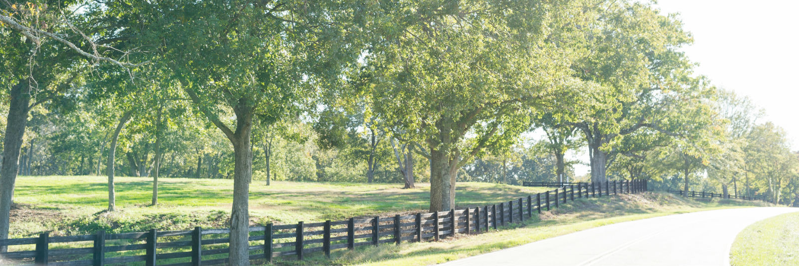Tree lined path with fence