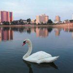 40-Lake-Mirror-Swan