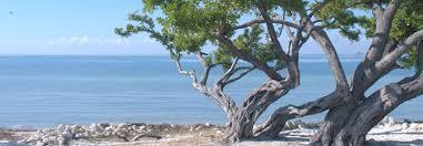 shoreline-tree