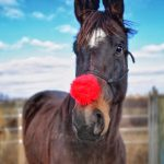 This photo of Sheila Thompson's horse Mr. Derby won our #HolidayHorse contest.