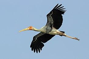 MNEUG Stork SIG